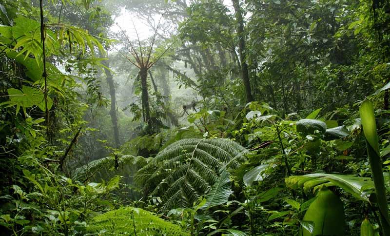 jungle backdrop mybackdrop co uk