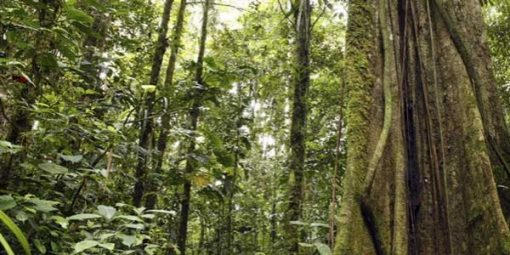 Rainforest backdrop - no animals