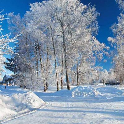 winter-snowy-scene-backdrop.jpg