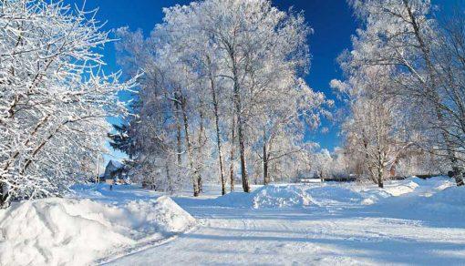 winter-snowy-scene-backdrop.jpg