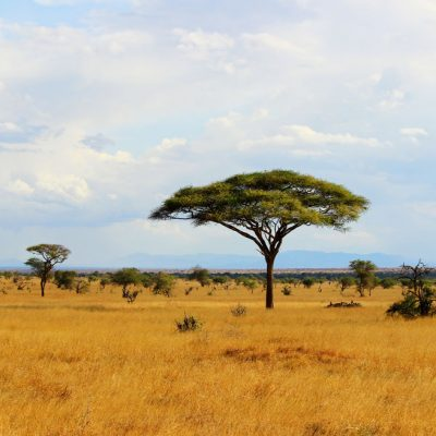 african plains backdrop