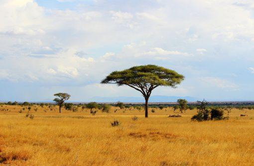 african plains backdrop