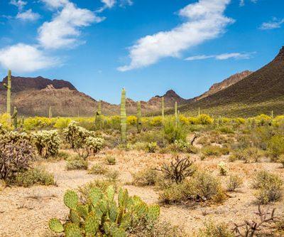 american desert backdrop