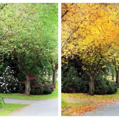 Four Seasons Images backdrop