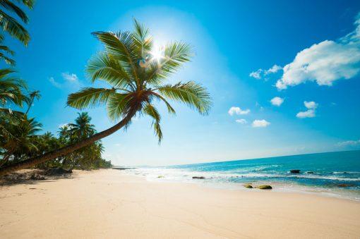 beach backdrop palm tree