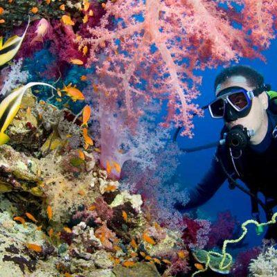 undersea-diver-coral-backdrop.jpg