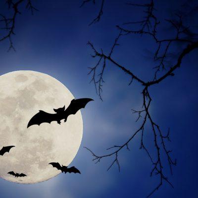 halloween moon backdrop 2