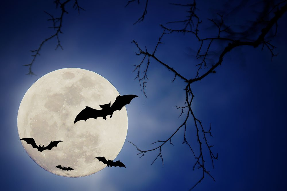 halloween moon backdrop 2