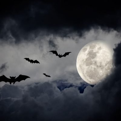 halloween moon backdrop 3
