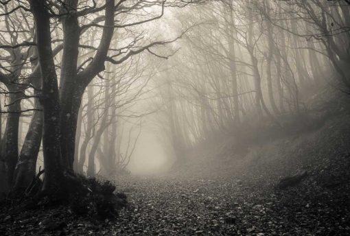 halloween wood backdrop