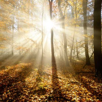 Autumn Woodland Sunbeams