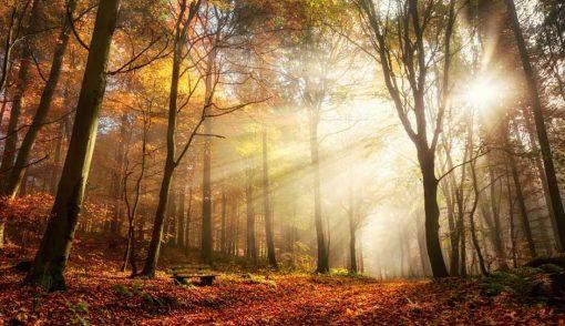 woodland path sunlight
