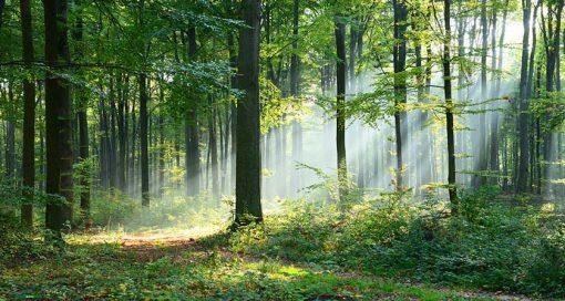 wood-green-rays-web
