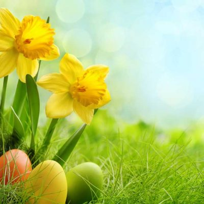 Spring-daffodils-painted-eggs