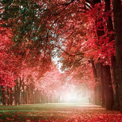 romantic-avenue-of-trees