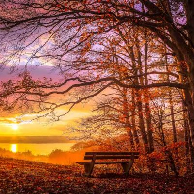 romantic-bench-wood-sunset