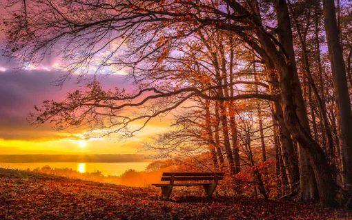 romantic-bench-wood-sunset